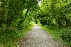 Chemin de région boisée Image stock