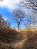Chemin de randonneurs dans le San Pedro Riparian National Conservation Area Image libre de droits