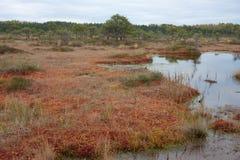 Chemin de Riisa sur le marais de Sooma Images libres de droits
