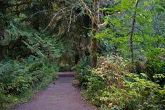 Chemin de saleté à travers la forêt de côte ouest Image libre de droits
