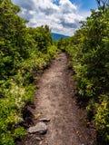 Chemin de saleté à travers le feuillage luxuriant sur le sommet de montagne image libre de droits