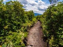 Chemin de saleté à travers le feuillage luxuriant sur le sommet de montagne photos stock