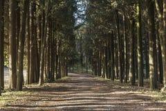 Chemin de saleté parmi les arbres Photos stock