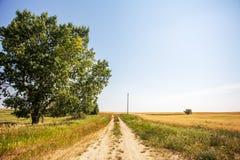 Chemin de saleté près d'un arbre vert divisant la terre de pâturage Photographie stock libre de droits