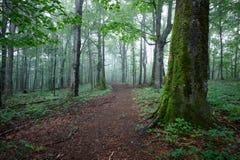 Chemin de chemin de terre à travers la forêt Photos libres de droits
