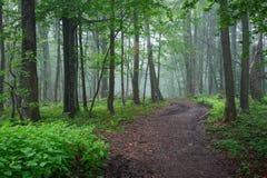 Chemin de chemin de terre à travers la forêt Photographie stock libre de droits