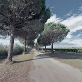 Chemin de terre Image stock