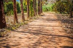Chemin de terre au milieu de forêt de yai de khao Photographie stock libre de droits