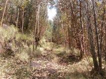 Chemin de terre au milieu de forêt photo libre de droits