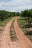 Chemin de terre au parc national de Matusadona images stock