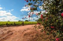 Chemin de terre avec des fleurs Photo stock
