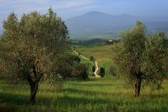 Chemin de terre blanc par les oliviers Photographie stock libre de droits
