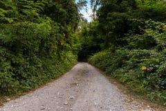Chemin de terre dans la campagne entourée par des forêts Image stock