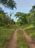 Chemin de terre dans le Bush africain Image libre de droits