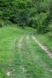 Chemin de terre dans les bois Photo libre de droits