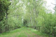 Chemin de terre dans les bois de la région de Moscou Image stock