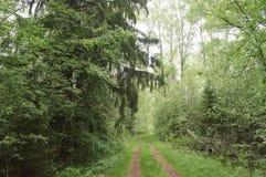Chemin de terre dans les bois de la région de Moscou Photographie stock libre de droits