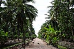 Chemin de terre en parc Feuilles vertes des palmiers de noix de coco se tenant en ciel tropical bleu lumineux, dans le jardin photographie stock libre de droits