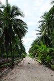Chemin de terre en parc Feuilles vertes des palmiers de noix de coco se tenant en ciel tropical bleu lumineux, dans le jardin photographie stock