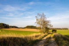 Chemin de terre entre les prés et les champs photo stock