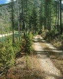 Chemin de terre envahi dans la forêt à côté de la rivière Photographie stock libre de droits