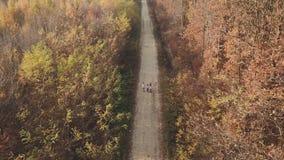 Chemin de terre de forêt de primevère farineuse clips vidéos