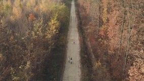 Chemin de terre de forêt de primevère farineuse banque de vidéos