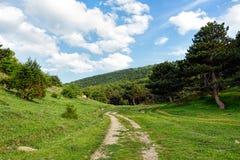 Chemin de terre menant dans une forêt images libres de droits