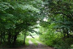 Chemin de terre par des arbres images libres de droits