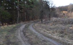 Chemin de terre par la forêt Images stock