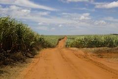 Chemin de terre par le sucre Photo libre de droits