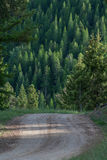 Chemin de terre par les bois Images libres de droits