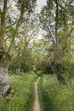 Chemin de terre par une forêt Image libre de droits