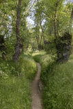 Chemin de terre par une forêt Photographie stock libre de droits