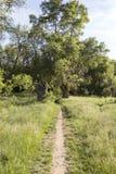 Chemin de terre par une forêt Photo libre de droits