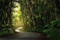 Chemin de terre passant par profondément, jungle luxuriante photographie stock libre de droits