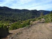Chemin de terre poussiéreux dans des araucarias de las de parc dans le patagonia Image libre de droits