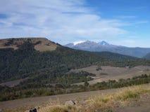 Chemin de terre poussiéreux dans des araucarias de las de parc dans le patagonia Photo stock
