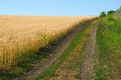 Chemin de terre près de champ de blé Image stock