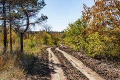Chemin de terre roulé étendu par une petite forêt images stock