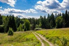 Chemin de terre rural menant à la forêt conifére image libre de droits