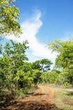 Chemin de terre se transformant en régions boisées Photo libre de droits
