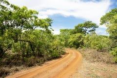 Chemin de terre se transformant en régions boisées Photo stock