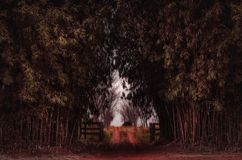 Chemin de terre un jour sombre entouré par les arbres en bambou Image stock
