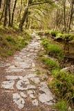 Chemin dedans à la forêt Image stock