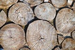 Chemin des broches d'un arbre, fond Photographie stock
