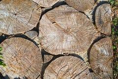 Chemin des broches d'un arbre, fond Images stock