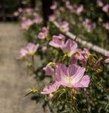 Chemin des fleurs Photos libres de droits