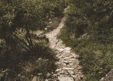 Chemin des pierres qui fonctionne par une forêt luxuriante image stock