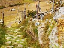 Chemin des roches avec beaucoup d'herbe Photos libres de droits